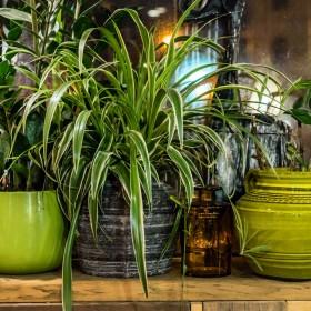 10 mało wymagających, łatwych w uprawie roślin domowych