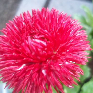 wiosna w moim domu i ogrodzie..............