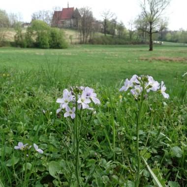 """Jeszcze kilka świątecznych kolorowych pisanek na okraszenie słotnego kwietnia i oczywiście kwiaty.Jak w myśl piosenki:""""Tam właśnie teraz rozkwitły kwiatyStokrotki, fiołki, kaczeńce i makiPod polskim niebem, w szczerym polu wyrosłyOjczyste kwiaty. W ich zapachu, urodzie jest Polska"""""""