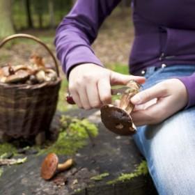 Pierwsza pomoc w przypadku zatrucia grzybami!