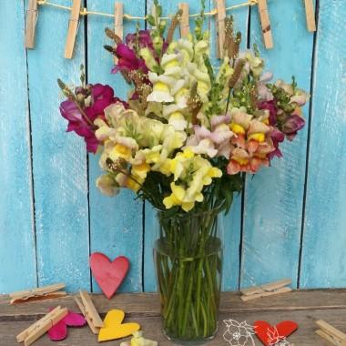 A to z naszego ogrodku kwiaty