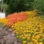 Pozostałe, Ogrod botaniczny