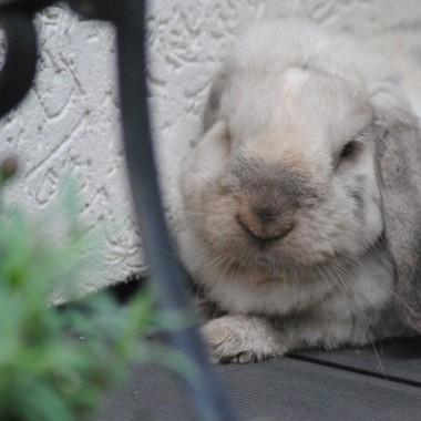 Stefan cziluje na tarasie ,bo wreszcie przyjemna dla niego temperatura :)