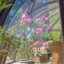 Rośliny, Mój ogród. - Kwiat w szklarni.. Królestwo moich rodziców;)