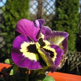 Wiosna w domu i ogrodzie