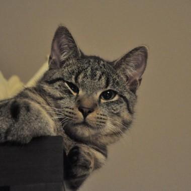 """""""zwyczajny"""" kot :)"""