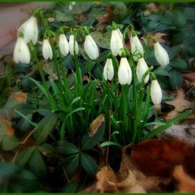 ...Miecia pyta,czy widzialam wiosne..
