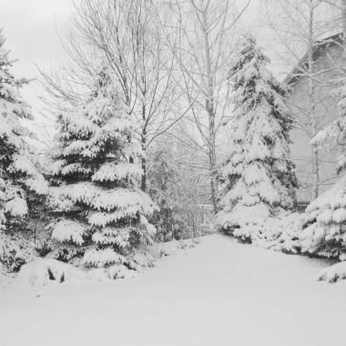 """""""I już lecą z nieba śnieżki,zasypują drogi, ścieżki..."""""""