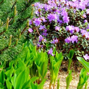 Ogrodowe migawki wiosną ...