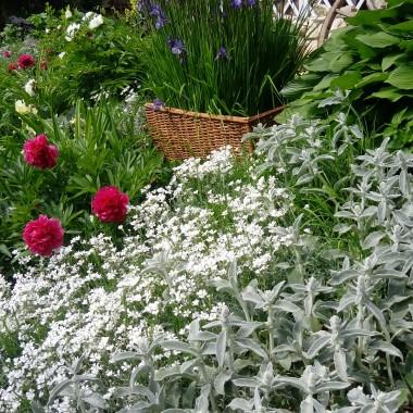 Mój mały ogródek ,o tej porze roku jest najpiękniej .Moje ukochane piwonie w tym sezonie zaskoczyły mnie bo koazało się ,że mam też krzaczki z białymi kwiatami i w dodatku pięknie pachną.