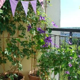 namiastka ogrodu