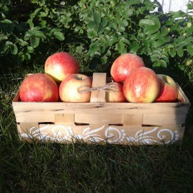 Jesień i jabłko w roli głównej