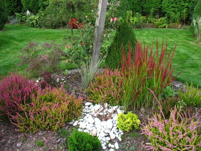 Rośliny, Piękno wrzosowisk