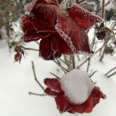 Zimowy czar