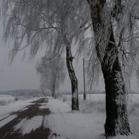 Świąteczne dekoracje pani Zimy.