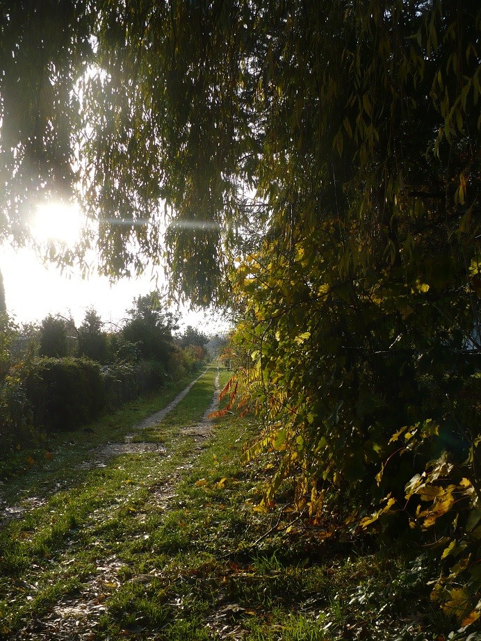 Pozostałe, Listopadowe małe radości................ - ............i słoneczna droga...............
