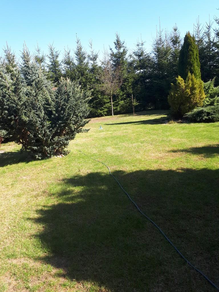 Ogród, Ogród wiosną... - Pierwsze słońce i nawożenie trawnika