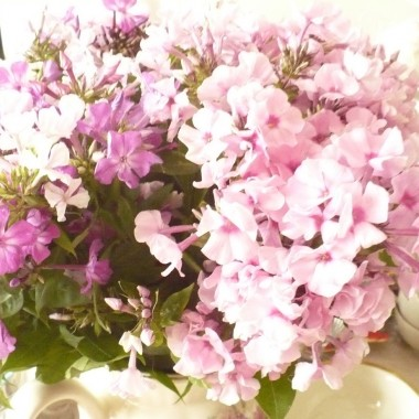 .................i floksy różowe , fioletowe i białe...........