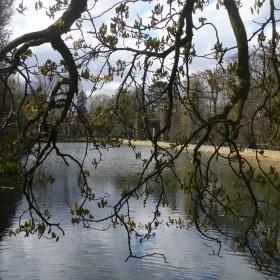 Wiosna w Parku Oliwskim ..................