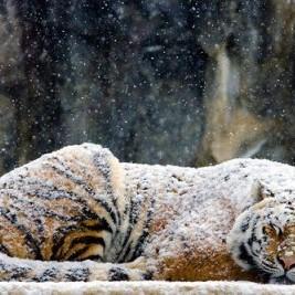 * zimową porą *