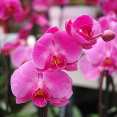 Stylowa Kobieta w Świecie Orchidei