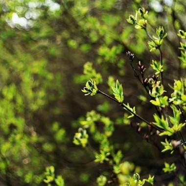 Julia testowała aparat - marzenie. I mam dzięki temu trochę zdjęć wiosennych. Przesyłam wszystkim wiosnę z Doliny Elmy.