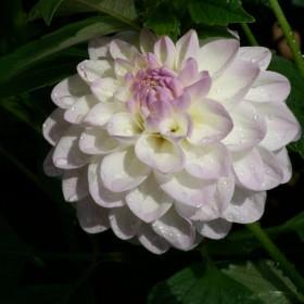kwiaty mojej mamuśki :*