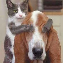 jak kot z psem