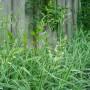 Pozostałe, ogród po deszczu:) - trawy rosną jak głupie;)