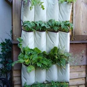 Zioła na naszych balkonach, w ogrodach......