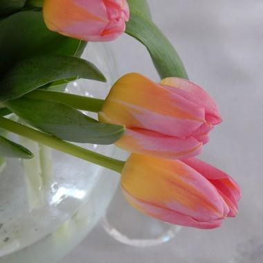 """""""Biała brzoza duszę ma,tajemnicę naszą zna""""Od wielu już lat jestem obłędnie zachwycona białymi brzozami."""