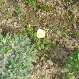 wiosenne kwiaty :)