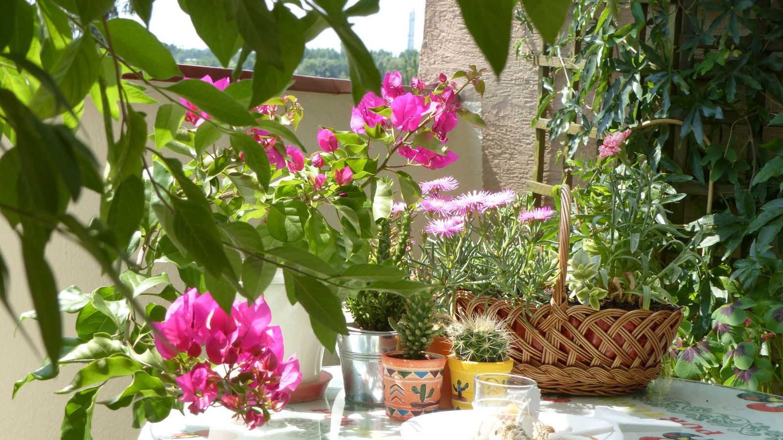 6 Najpiękniej Pachnących Roślin Na Balkon Deccoriapl