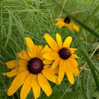 Zapraszam na spacer po pieknym parku.Znalesc tu mozna sliczne kwiaty, latajace motyle.Sa tez ciekawe rzezby i sliczna oranzeria z cudnymi orchideami. Przy wejsciu do parku stoja stragany - a na nich same pysznosci od lokalnych dostawcow. Mozna kupic pyszne - organiczne warzywa, posmakowac sery, wybrac pachnace-chrupiace pieczywo...a na koncu kupic piekny kolorowy bukiet ,co kto lubi! Zobaczcie sami co jeszcze tam bylo i mnie mile zaskoczylo...