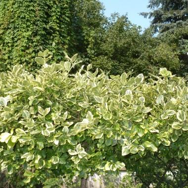 ................i ogród we wszystkich odcieniach zieleni........................