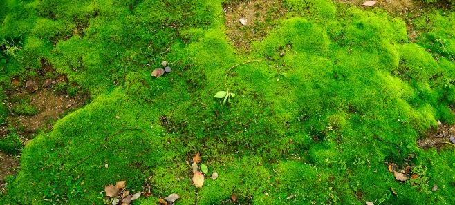 Zaproś mech do ogrodu. Jak zrobić ekograffiti?