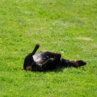 Gość specjalny w moim ogrodzie.Chyba zadowolony....