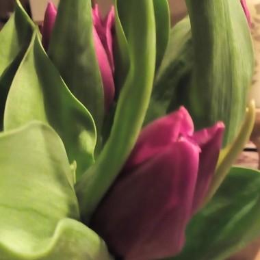 Tulipany zaczeto uprawiac w Persji ,w Imperium Osmanskim a dopiero w XVI WIEKU przywedrowaly do Holandii ,i ja wlasnie kupuje je u Holendra .