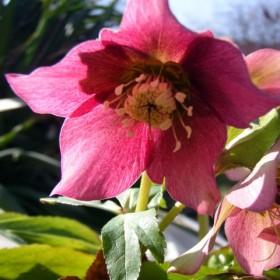Pierwsze kwiatki tego roku :)