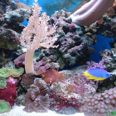 60 litrów podwodnego świata :-)