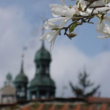 .............i widok spod magnolii.................