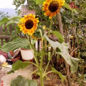 U babci w ogródku :)