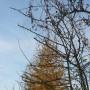 Rośliny, Listopadowe fotki.........i listopadowe bombki.......... - ................i błękitne niebo.............