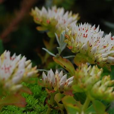 Kwiatki i roślinki w skalniaczku,zakwitając,są najładniejszą jego ozdobą...