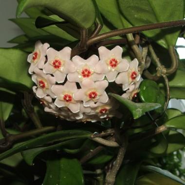 ogrodowo kwiatowo