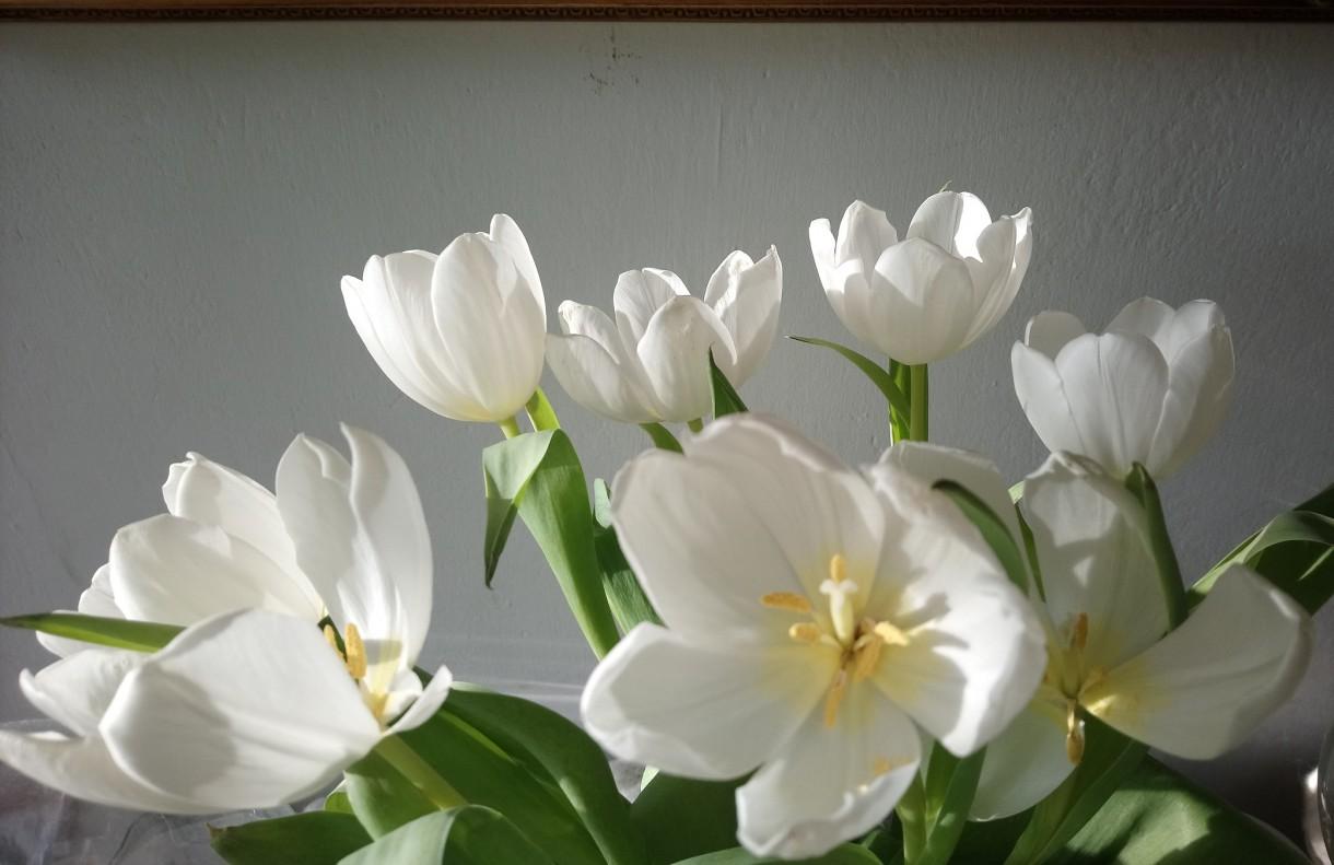 Rośliny, Idzie wiosna ..........