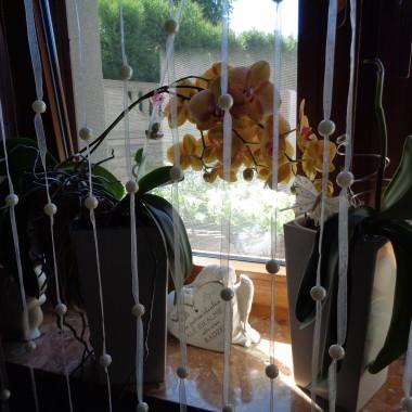 Kto z WAS kocha storczyki tak jak ja ??????Orchidea - storczyk taki mały,ale popatrz na kwiatkajaki jest wspaniały!Kwitnie i kwitnie,oczy pożera!Dla każdego jest przyjazny i nie sponiewiera!I wszystkim wokoło by się może zdawało,że wyhodować tego kwiatkato życia za mało.Lecz do życia niewiele potrzebujereceptę na niego ja Ci podaruję!Najlepiej gdybyś raz w tygodniuw wannie go kąpałai jeden raz w miesiącu nawozu dawała.Mocnego słońca nie potrzebuje,bo słońce liście pali i źle się czuje.Postaw go w małym cieniuby kwiatami sypał i lekko się lenił.A teraz powiedz,którego byś dostać chciała?Białego,fioletowego czy żółtego mieć byś chciała?