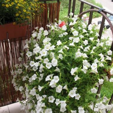 balkon AD 2012 &#x3B;-)