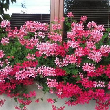 kwiaty w ogrodzie :)