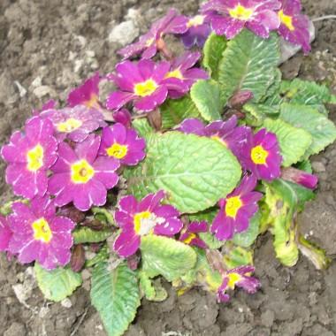 wiosenne słodziakowe kwiatuszki :)